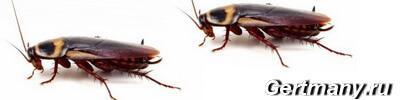 Рыжих муравьев и тараканов можно вывести из дома с помощью.